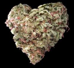 My Love Nug