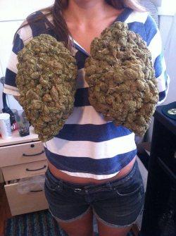 Big marijuana bud boobies