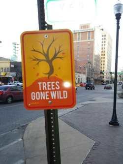 Trees Gone Wild!