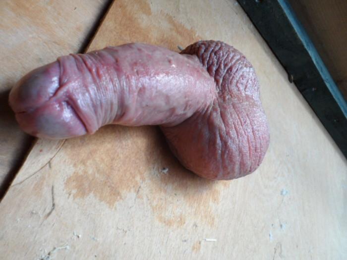 Penis Roast 104