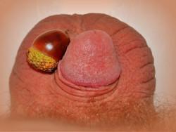 What an Acorn Dick Looks Like