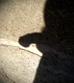 Shadow Cocksing?