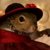 Flamboyant Sissy Mouse..