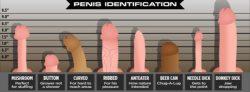Penis Identification Chart