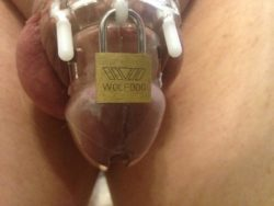 Shaved and Caged