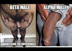 Black Beta vs Black Alpha Male: Understand the Difference?