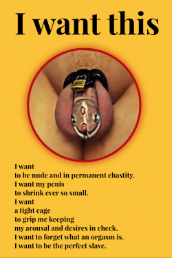 CHASTITY SLAVES!