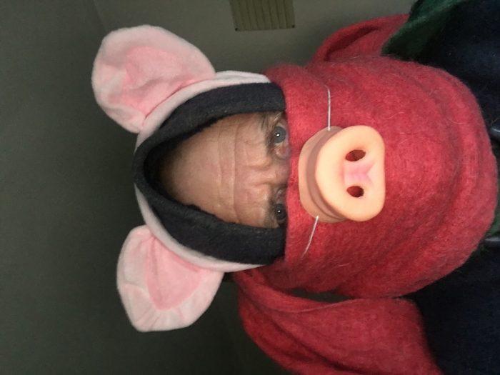 Duffled and muffled pig loser